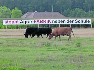 Keine Agrarfabrik neben der Schule