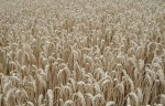 EU-Agrarreform schadet Artenvielfalt