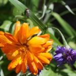 Blumen mit Käfer