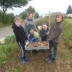 Urban Gardening  Schulacker  Kartoffelernte