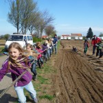 Urban Gardening  Furchen für die Saatkartoffeln