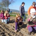 Urban Gardening  Kartoffel pflanzen