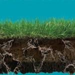 Leben fängt beim Boden an. Böden dienen nicht nur der Produktion von Nahrungs- und Futtermitteln und nachwachsenden Rohstoffen. Böden binden Nährstoffe und sind einer der größten Kohlenstoffspeicher der Welt. Böden reinigen und speichern Wasser und sind ein wichtiger Baustein für den Hochwasserschutz.