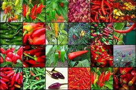 Das Feuer in der Küche: Chili und Paprika sind Gemüse des Jahres 2015/16