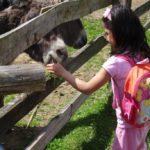 Esel - Kindergartenkind