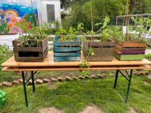 Nutzpflanzenvielfalt